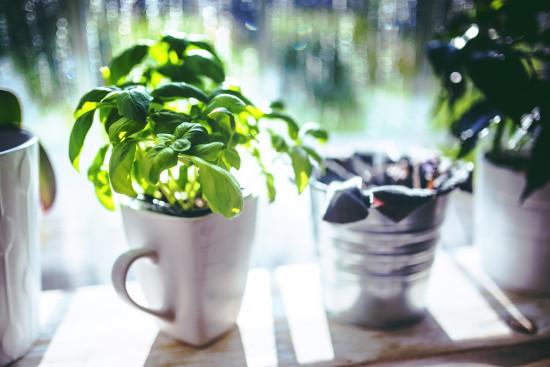 A small plant in a coffee mug