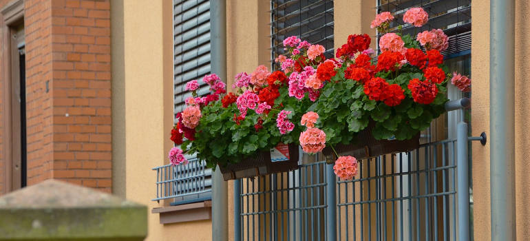 balcony-plants