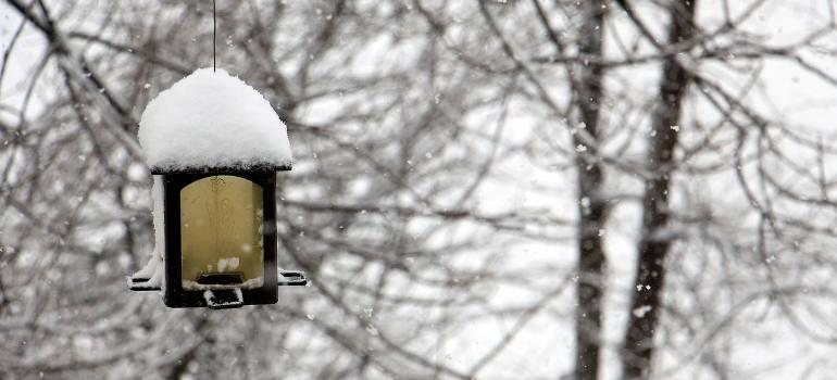 winter-garden-tips