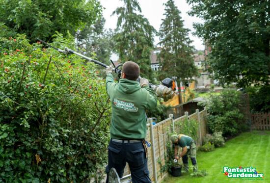 hedge trimming in twickenham