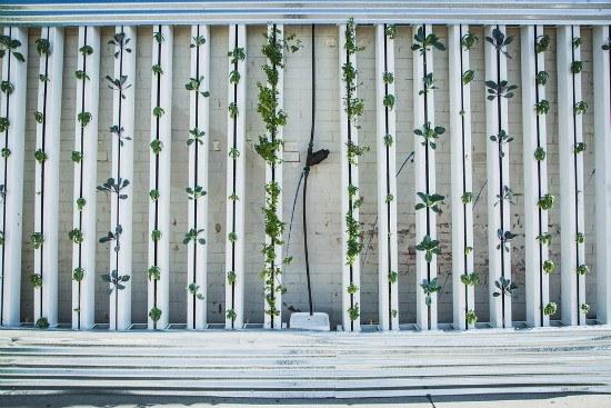 DIY Vertical Green Wall