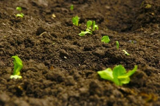 Soil in a garden