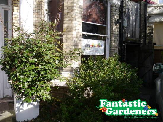hedge at entrance door