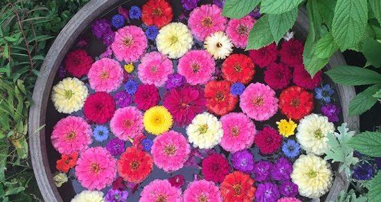 Growing flowers in a bucket