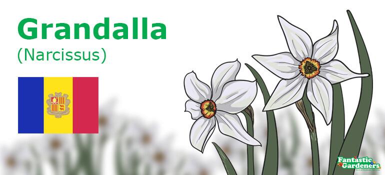 Andorra's national flower