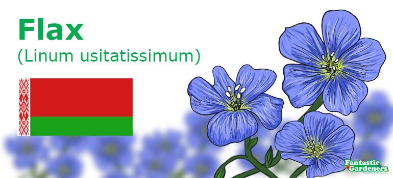 Belarus national flower