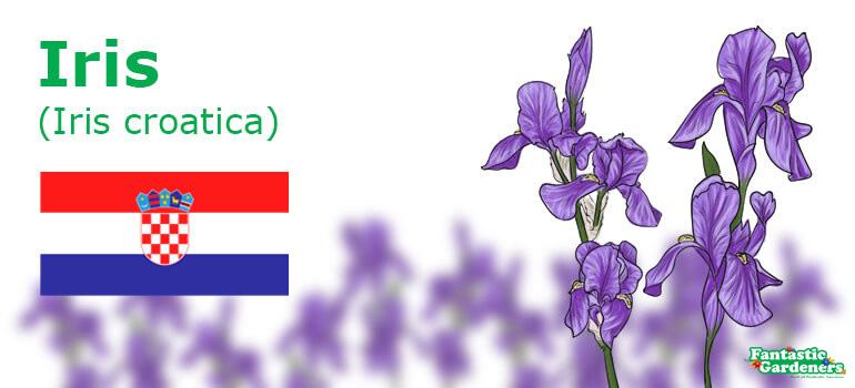 Croatian floral emblem