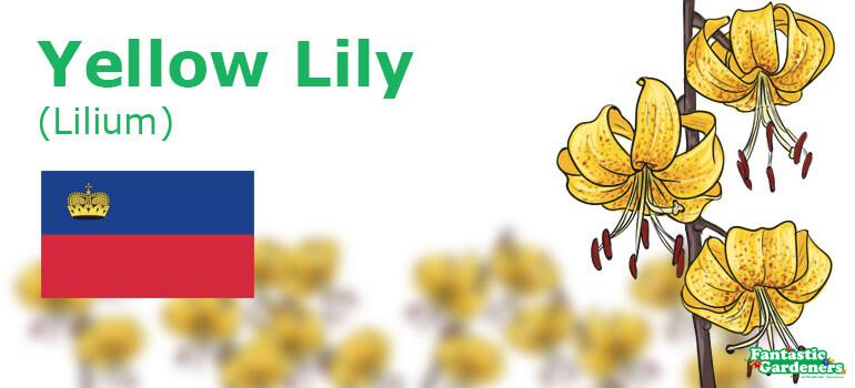 national flower of Liechtenstein