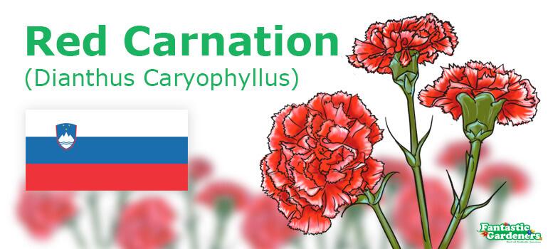 national flower of Slovenia