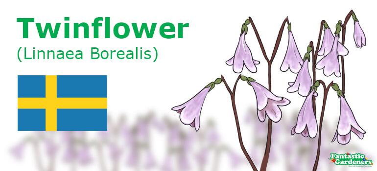 Sweden's national flower