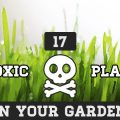 17 Toxic Plants In Your Garden