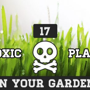 poisonous plants in your garden infographic