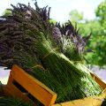 How to Preserve Herbs from Your Garden