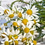 5 Easy to Find and Harvest Edible Wild Plants