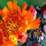 Fantastic Gardeners' To-Do List for June
