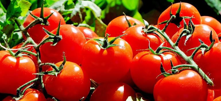 tomato-planting-in-june