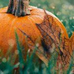 Gardening Jobs for October