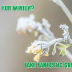 Are You Ready for Winter? Take Fantastic Gardeners' Quiz
