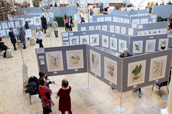 hrs botanical art and illustration show