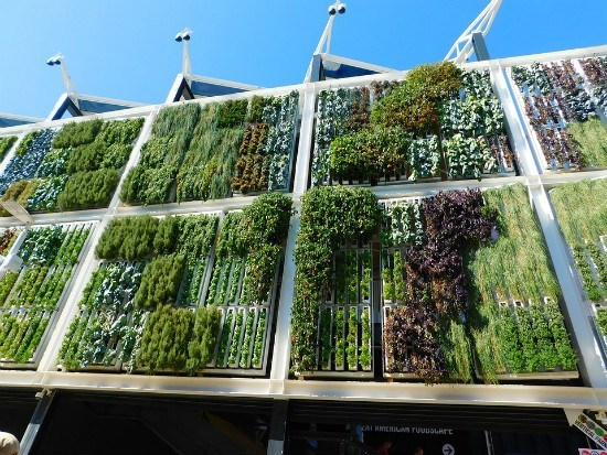Vertical garden on building