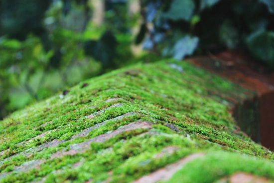 Moss on stone fence