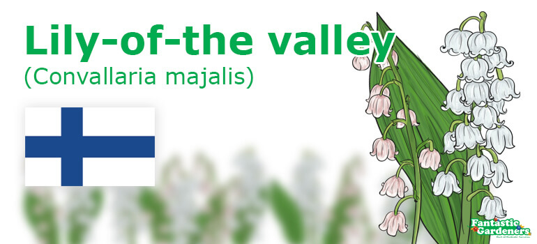 national flower of Finland