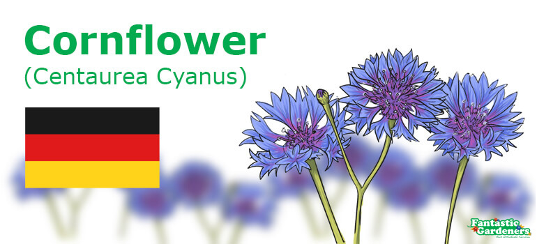 Germany national flower