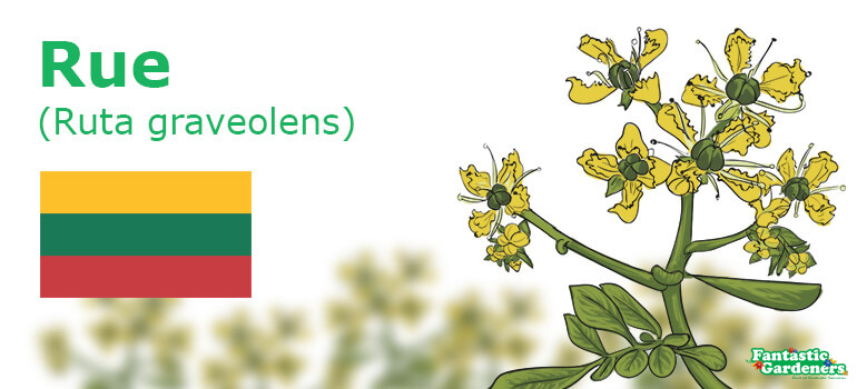 national flower emblem of Lithuania