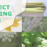 24 Plants that Repel Insects