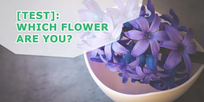 which flower are you