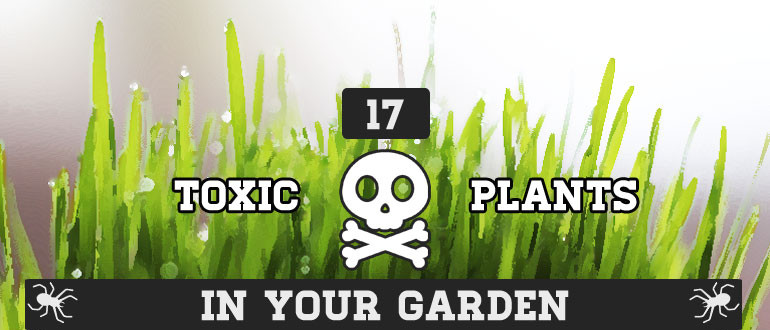 Poisonous-Plants-in-Your-Garden