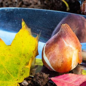bulb planting tips