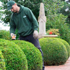 gardening trends 2017