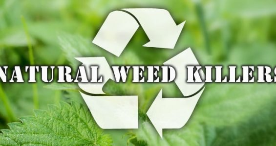 Natural Weed KIllers Banner