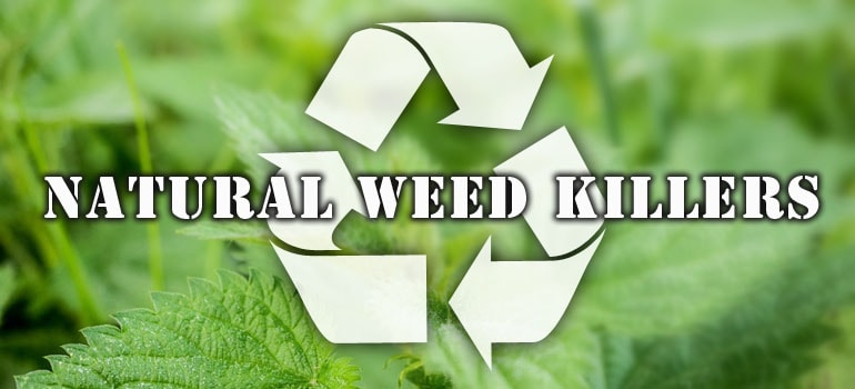 Natural Weed KIllers Banner