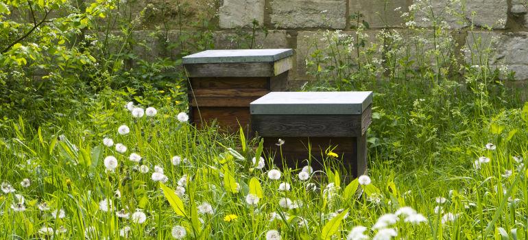 allergy free garden