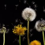 How to Keep Pollen Out of Your Home