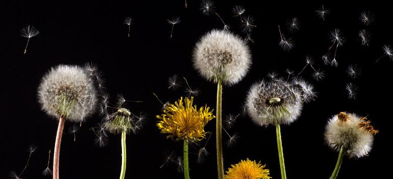 pollen spread