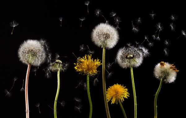 pollen spreading