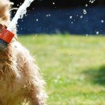 9 Tips for Gardening with Dogs