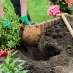 Basic Gardening Tips for Beginners
