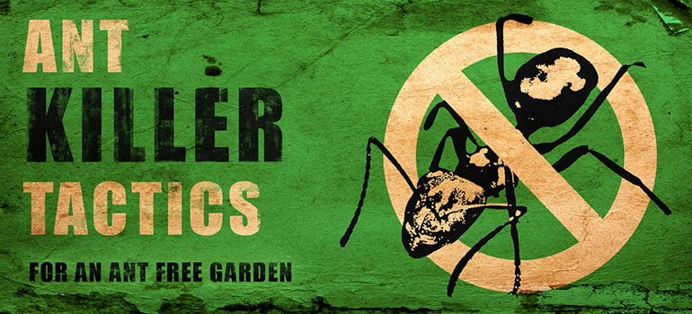 Ant Killer Tactics – How to Get Rid of Ants in the Garden ...