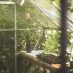 How to Grow More with Greenhouse Maintenance