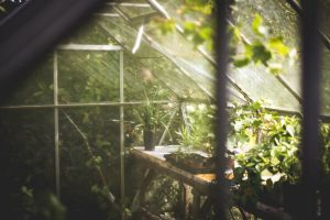 greenhouse maintenance advice