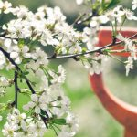 How to Prepare Your Garden for Early Spring