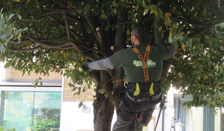 Tree surgery by Fantastic Gardeners
