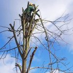 How Much Do Tree Surgeons Charge on Average in UK?