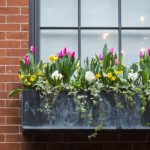 What can you grow in window boxes?