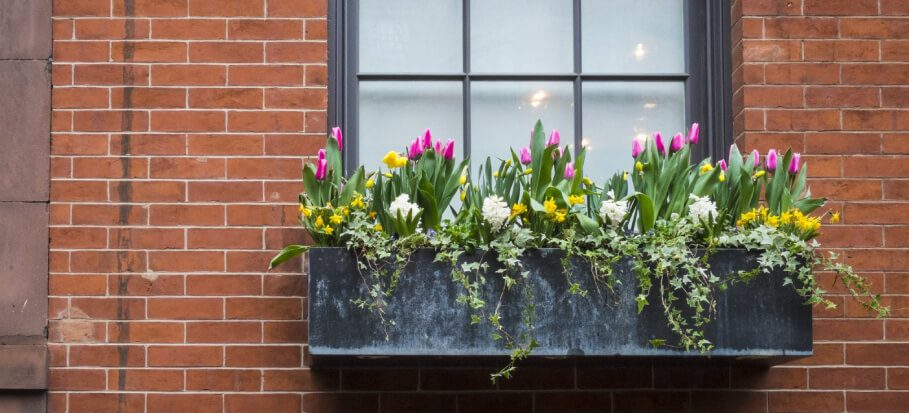Window-box-flowers