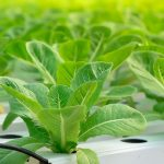 Best Tips to Start Your Hydroponic Garden